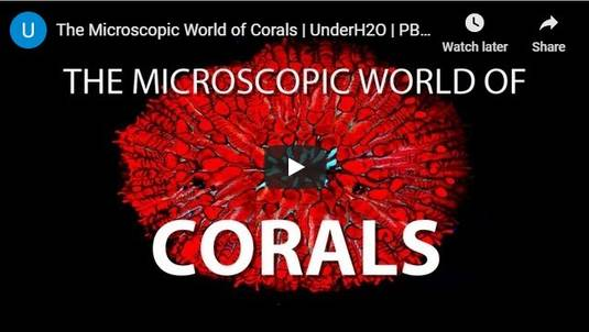 The Microscopic World of Corals